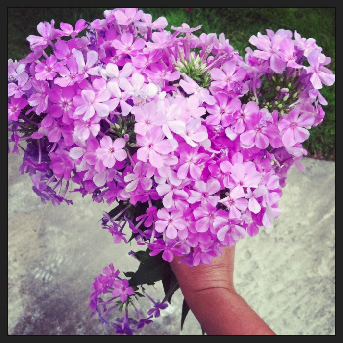 fresh purple flowers