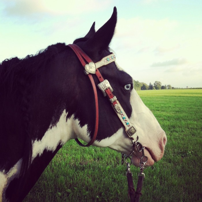 Rumor, black & white Paint mare