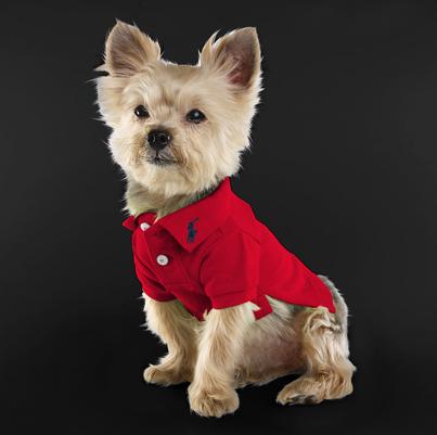 Ralph-Lauren-Classic-Dog-Polo