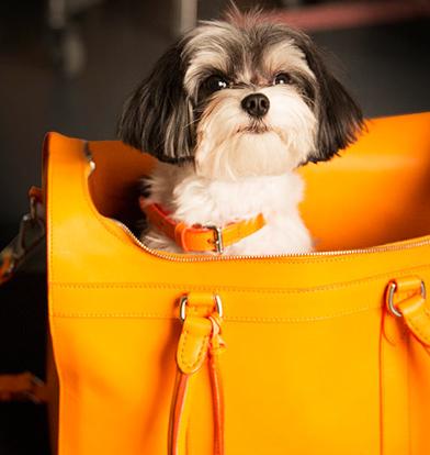 Ralph Lauren: The Dog Walk