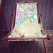 Mango lounges on a Lilly for Target Chair
