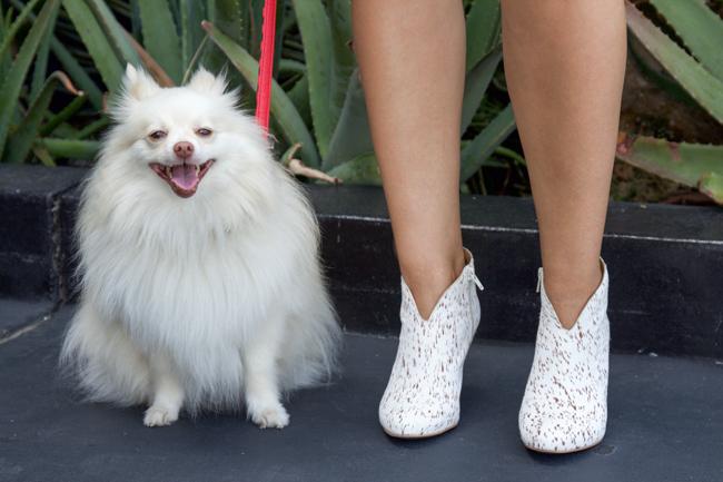 Mango the Pomeranian and my favorite heels