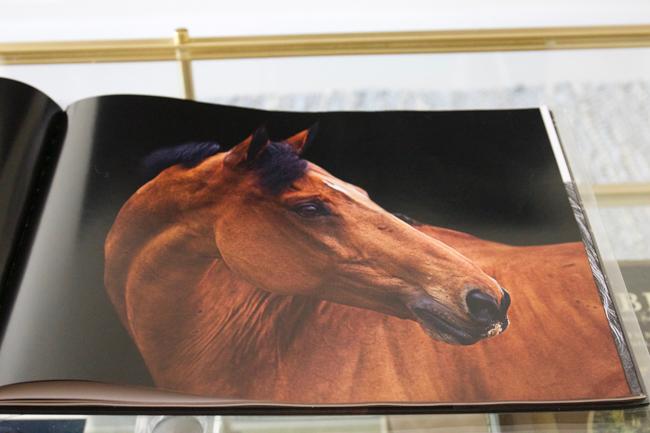 Inside the book Horse-Human- An Emotional Bond by Bob Tabor